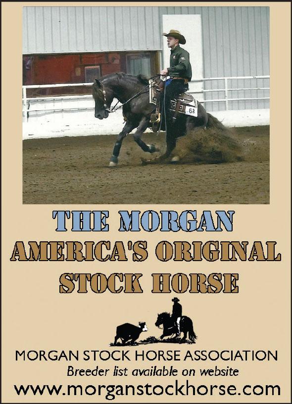 Morgan Stock Horse Association