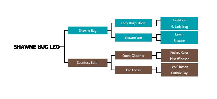 Shawne Bug Leo pedigree